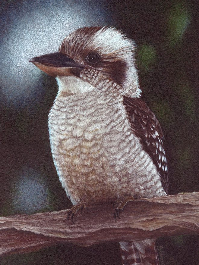 Kookaburra - Central Coast NSW Artist Belinda Lindhardt- Prints & Cards for Sale