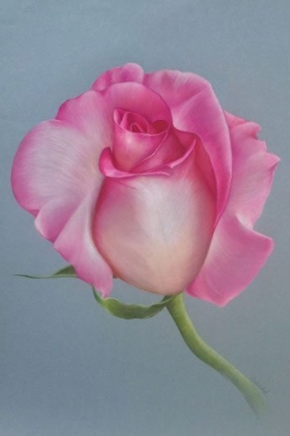 Pink Creation - Floral Artwork by Central Coast NSW Artist Belinda Lindhardt- Prints & Cards for Sale