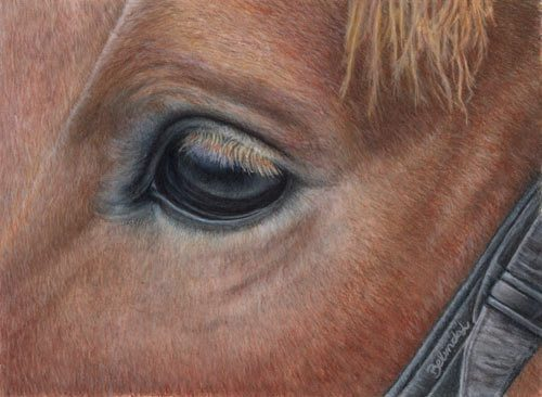 It's all in the Eye - Coloured Pencil Artwork by Australian Artist Belinda Lindhardt