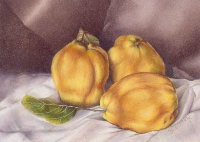 Quinces - Coloured Pencil Artwork by Australian Artist Belinda Lindhardt