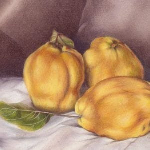 Quinces - Realism Artworks by Belinda Lindhardt
