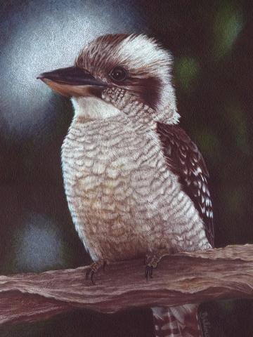 Kookaburra - Central Coast NSW Artist Belinda Lindhardt- Prints & Cards for Sale