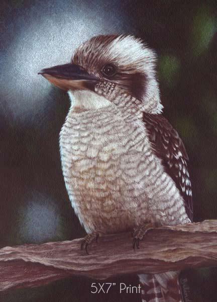 Art Prints for sale - Kookaburra - 5X7