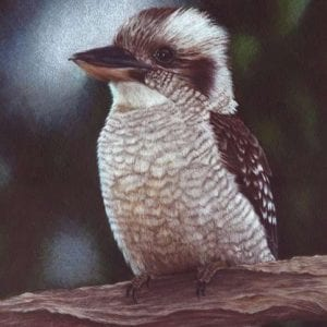 Art Prints for sale - Kookaburra -8X10