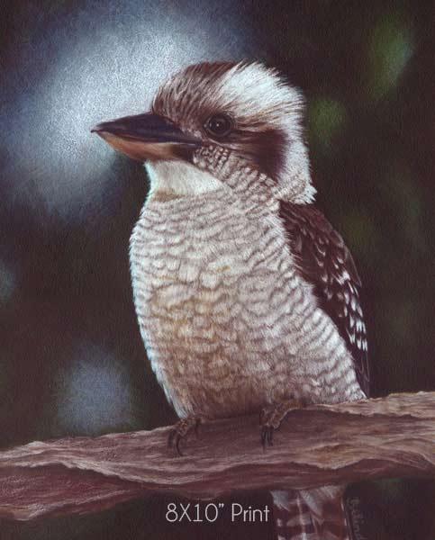 Art Prints for sale - Kookaburra -8X10