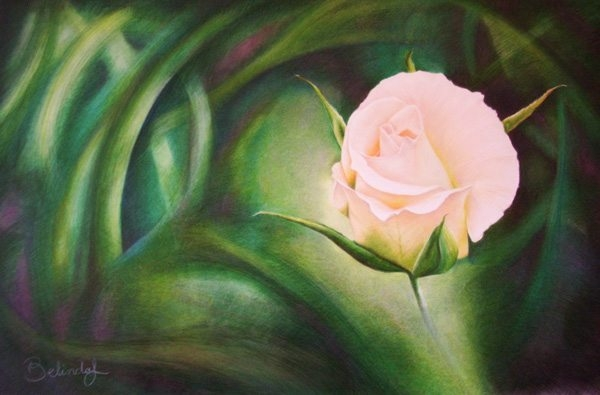 Floral Coloured Pencil Artwork by Australian Artist Belinda Lindhardt