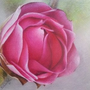 Camelia - Original Art for Sale - Sydney Artist Belinda Lindhardt