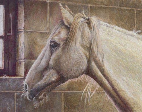 White Horse - Coloured Pencil Artwork by Australian Artist Belinda Lindhardt