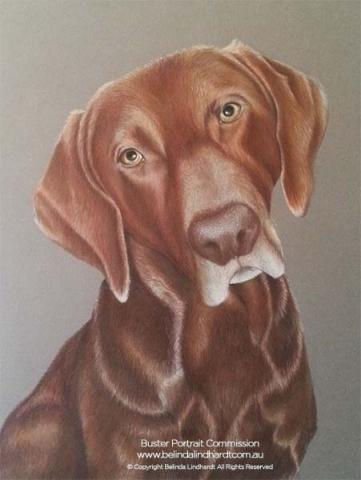 Buster - Coloured Pencil Artwork by Australian Artist Belinda Lindhardt