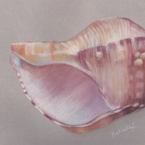 Pink Shell - Coloured Pencil Artwork by Australian Artist Belinda Lindhardt