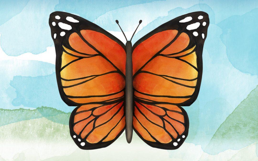 Illustration, Animation Australia - Butterfly - Belinda Lindhardt - Central Coast NSW, Sydney