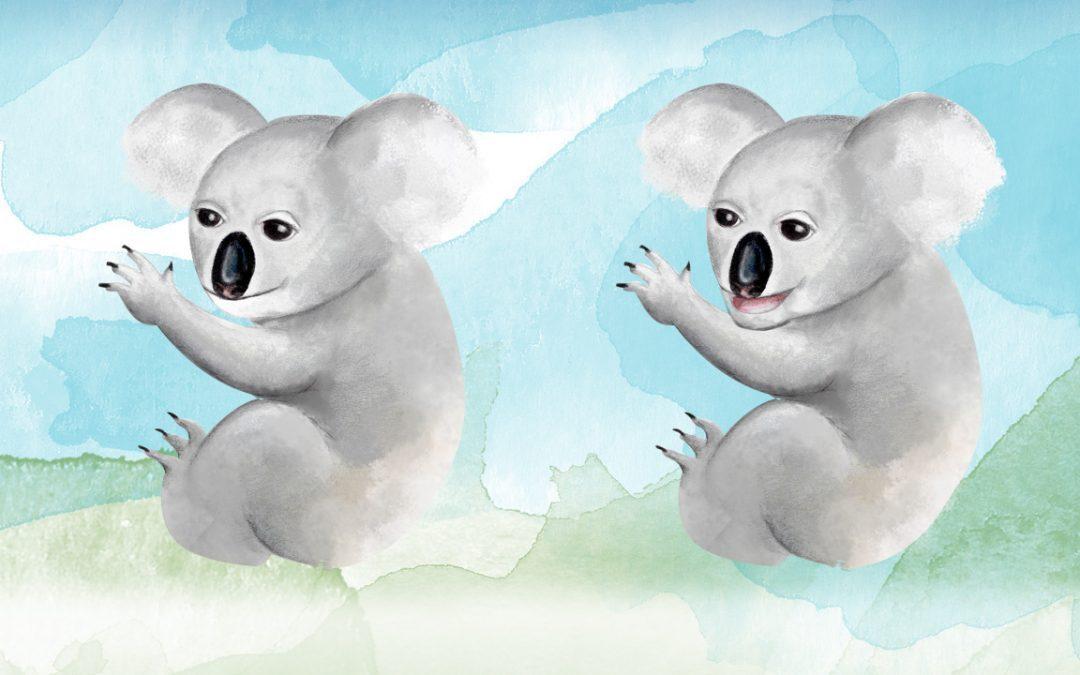 Illustration, Animation Australia - Koala - Belinda Lindhardt - Central Coast NSW, Sydney