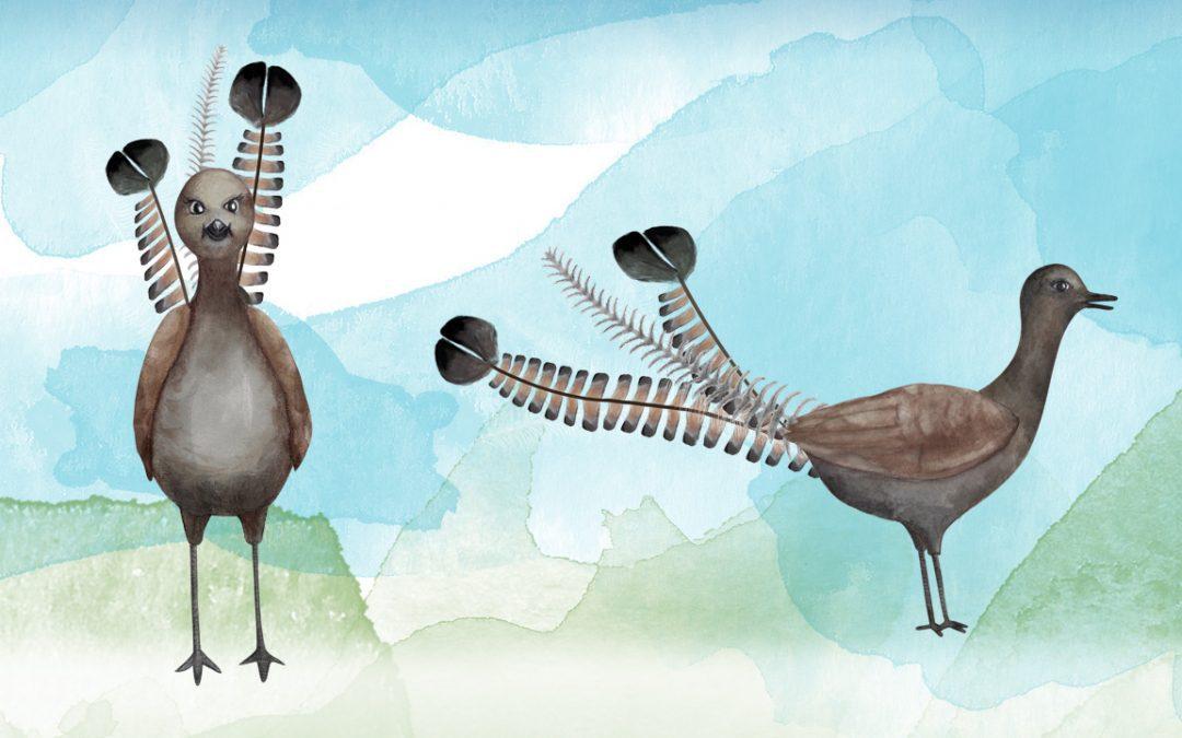 Illustration, Animation Australia - Lyre Bird - Belinda Lindhardt - Central Coast NSW, Sydney