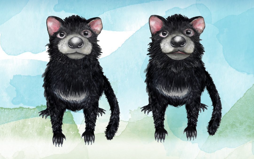 Illustration, Animation Australia - Tassie devil - Belinda Lindhardt - Central Coast NSW, Sydney