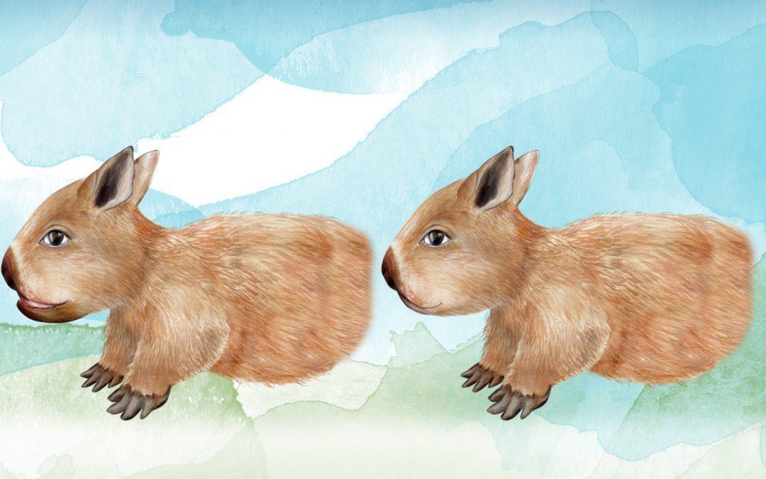 Illustration, Animation Australia - Wombat - Belinda Lindhardt - Central Coast NSW, Sydney