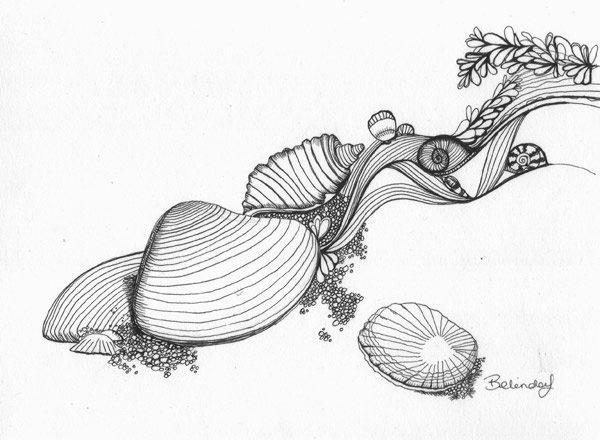 Shells Illustration - Belinda Lindhardt - Australian Artist & Illustrator