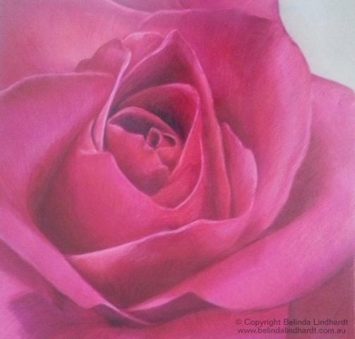 Deep Pink Rose - Coloured Pencil Artwork by Australian Artist Belinda Lindhardt