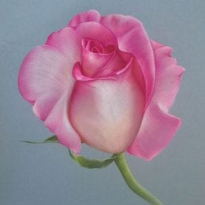 Pink Creation - Coloured Pencil art by Belinda Lindhardt