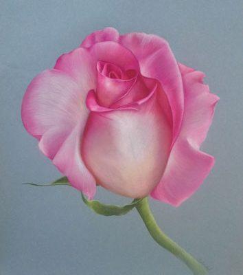 Pink Creation - Coloured Pencil art by Belinda Lindhardt